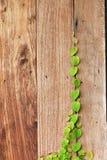在木墙壁上的绿色叶子 免版税库存图片