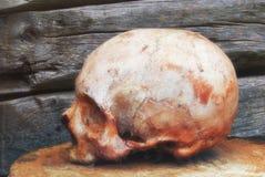 在木墙壁的背景的真正的人的头骨 图库摄影