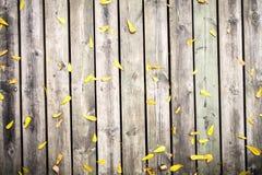 在木墙壁纹理的黄色叶子 库存图片