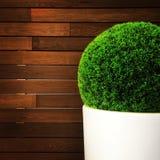 在木墙壁附近的装饰植物 免版税库存照片