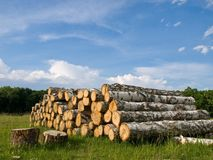 在木头之下的天空 库存照片