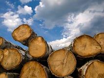 在木头之下的天空 免版税图库摄影