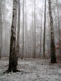 在木头之下的桦树雪 免版税库存图片
