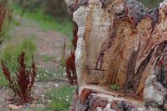 在木头削减的位子 免版税图库摄影