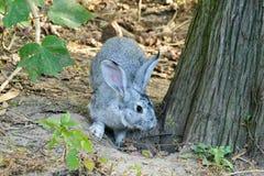 在木头的一只兔子 免版税库存图片