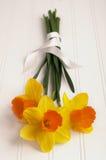 在木头的丝带包裹的黄水仙花束 图库摄影
