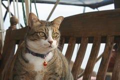 在木头的喜怒无常的猫身分 图库摄影