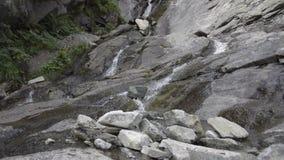 在木头的松弛溪在阿尔卑斯在夏天 影视素材
