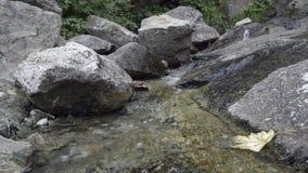 在木头的松弛溪在阿尔卑斯在夏天 股票录像