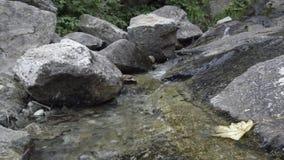 在木头的松弛溪在阿尔卑斯在夏天 股票视频