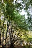 在木头的树与过滤通过和温暖的秋天co的低太阳 库存图片