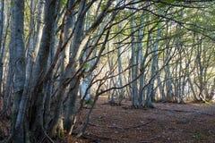 在木头的树与过滤通过和温暖的秋天co的低太阳 免版税图库摄影