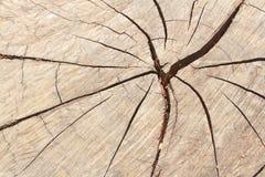在木头的模式。 库存照片