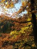 在木头的秋天在法兰克福附近 库存照片