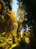 在木头的秋天在法兰克福附近 库存图片
