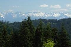在木头的积雪的Tatra山 免版税库存图片