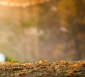 在木头的红色antor黄色蚂蚁 库存图片