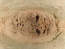 在木头的结 库存图片