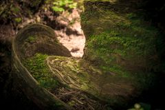 在木头的美丽的mos 库存照片
