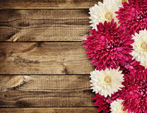 在木头的翠菊花 库存照片