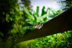 在木头的蝴蝶在北泰国 库存图片