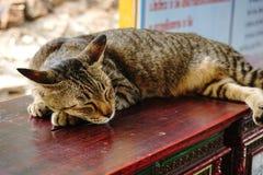 在木委员会的一只睡觉猫 免版税图库摄影