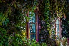 在木房子的Windows长满与美丽的植物 免版税库存照片