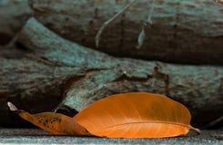 在木日志前面位于的橙色叶子 免版税库存图片