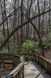 在木木板走道的人行道通过森林 免版税库存图片