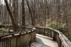 在木木板走道的人行道通过森林 免版税库存照片