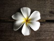 在木木板走道背景的白色赤素馨花 库存图片