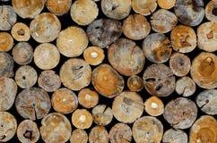 在木材切口的日志联络眼 免版税库存照片