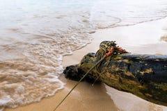 在木材的被绘的大螯虾 库存照片