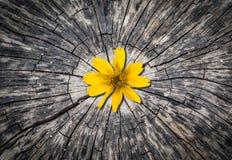 在木材的黄色花 图库摄影