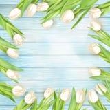 在木板条的新鲜的白色郁金香 10 eps 库存图片