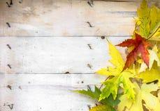 在木板条的秋叶 免版税库存照片