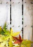 在木板条的秋叶 库存图片