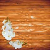 在木板条背景的白色兰花 免版税库存照片