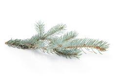 在木板条witc贺卡的绿色云杉的枝杈 免版税库存图片