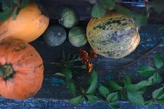 在木板的南瓜有被弄脏的背景 库存照片