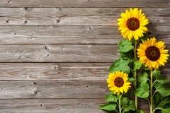 在木板的向日葵 库存照片