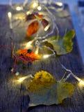 在木板的秋叶 图库摄影