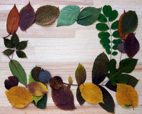 在木板的花卉框架 库存照片