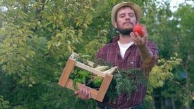 在木板箱的家庭有机菜,草帽的喜悦的男性农夫在庭院投掷在空气的一个蕃茄 股票录像