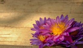 在木板背景的紫罗兰色和黄色荷花 免版税图库摄影