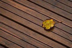 在木板走道的一片黄色叶子 免版税图库摄影