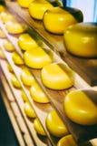 在木架子的乳酪回合 免版税图库摄影