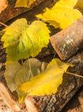 在木柴的秋天和冬天叶子 免版税图库摄影