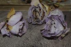 在木桌上的三朵干燥玫瑰 免版税库存图片