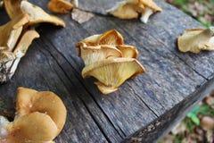 在木桌上的不同的蘑菇 图库摄影